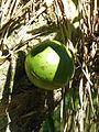 Lomas de Banao-Calebasse (1).jpg