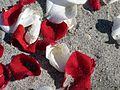 Lori Wilson Park - Cocoa Beach FL - Flickr - Rusty Clark (19).jpg