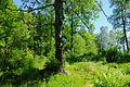 Lutdalen - 2014-06-09 at 15-29-44.jpg