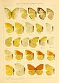 Macrolepidoptera01seitz 0055.jpg