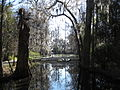 Magnolia Plantation and Gardens - Charleston, South Carolina (8555456365).jpg