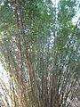 Magnolia Plantation and Gardens - Charleston, South Carolina (8556571440).jpg