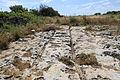 Malta - Rabat - Triq San Pawl tal-Qliegha - Bingemma Gap Cart Ruts 06 ies.jpg
