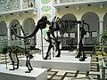 Mammuthus primigenius et al 2.jpg