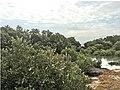Mangrove 82.jpg
