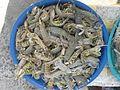 Mantis shrimp Thailand.jpg