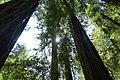 Marin County, CA, USA - panoramio (60).jpg