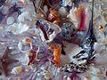 Marine life, Корален еко систем.JPG