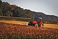 Massey Ferguson tractor and buzzard.jpg