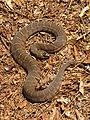 Mattaponi Wildlife Management Area, Virginia (7468016402).jpg