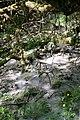 Maya Wendler - GPS 51.201643, 6.883316 - Naturschutzgebiet Unterbacher See (Eller Forst) 40627 Duesseldorf (5).jpg