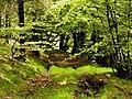 Meadow Hill plantation - geograph.org.uk - 438121.jpg