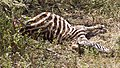 Meatu, Tanzania - panoramio (5).jpg