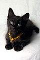 Merlin el gatito negro curioso (2006).jpg