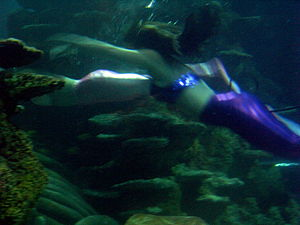 English: Underwater acrobats as mermaids at Lo...