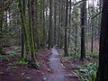 Merv's Trail - panoramio.jpg