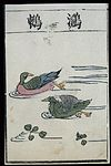 Ming herbal (painting); Xichi (a water fowl) Wellcome L0039443.jpg