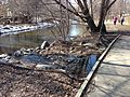 Minnehaha Creek in early spring.jpg