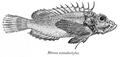 MinousMonodactylus.png