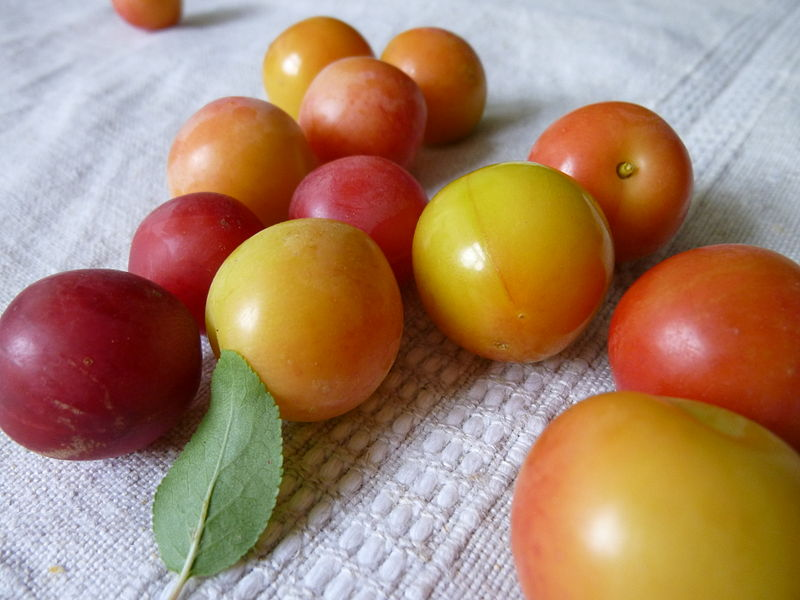 File:Mirabel plums 2.jpg