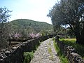 Monte Mojo, Mojo Alcantara, Sicily. - panoramio.jpg