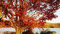 Moraine State Park in Fall 05.JPG
