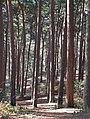 More Trees (16471488751).jpg