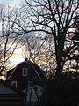 Morning sunrise house and tree in Summit NJ.JPG