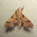 Moth 0100.jpg
