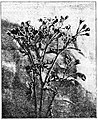Moths of the British Isles Fig24.jpg