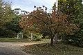 Mount Wilson NSW 2786, Australia - panoramio (25).jpg
