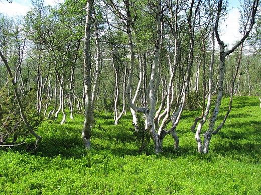 Betere Plantengeografie - Wikiwand YP-34