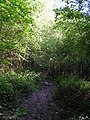 Muddy path through the woods, Blackland Farm. - geograph.org.uk - 182734.jpg