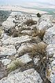 Muro este de Castellar de Meca 05.jpg