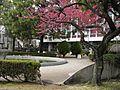 Musashino University and tree.jpg