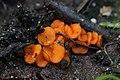 Mushroom (35853257442).jpg