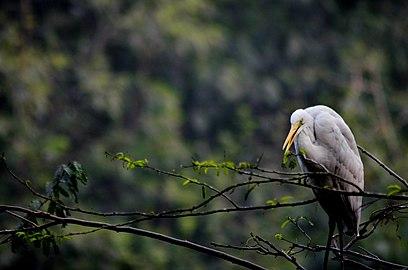 Mysterious bird heya.jpg