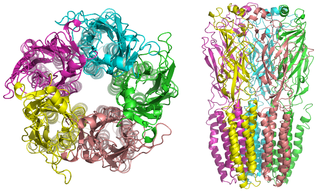 Nicotinic acetylcholine receptor - Nicotinic receptor structure