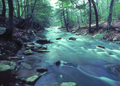 NRCSMD83006 - Maryland (4531)(NRCS Photo Gallery).tif