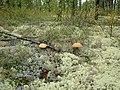 Nadymsky District, Yamalo-Nenets Autonomous Okrug, Russia - panoramio - sssirenko.jpg