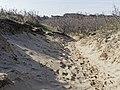 Nationaal Park Kennemerland (26498994407).jpg