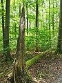 Nationalpark Hainich craulaer Kreuz 2020-06-03 18.jpg