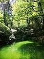 Nature Green Lake.jpg