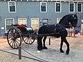 Natuurmuseum Fryslân - NK Prepareren - 01 paard.JPG