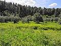 Near Flam winery - panoramio.jpg