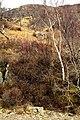 Near Kinloch Lodge - geograph.org.uk - 750262.jpg