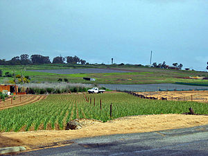 Neerabup, Western Australia - Agricultural land on Wattle Avenue