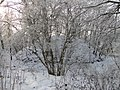 Neuenkirchen NSG Moorrinne von Klein Salitz bis zum Neuenkirchener See 2013-01-15 037.jpg