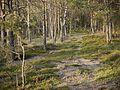 Niedersachsen Otternhagener Moor Weg durchs Moor JG 02.jpg