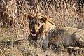 Nkomazi Game Reserve, South Africa (22030112654).jpg